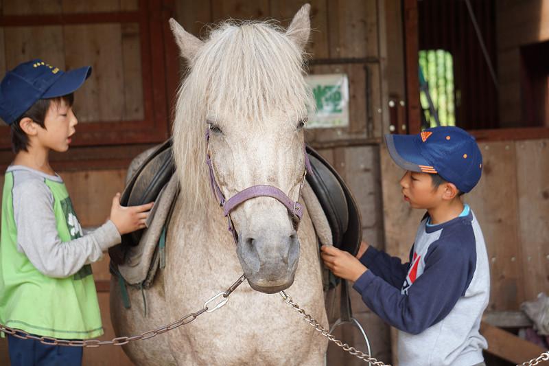 北海道新幹線で行く!馬と旅する北海道・牧場キャンプ~ホーストレッキングや飼育体験など