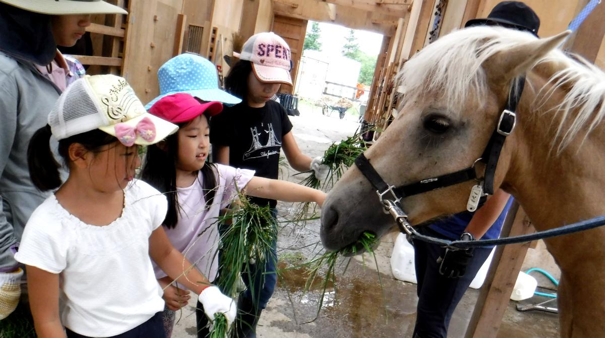 17713:北海道新幹線で行く!動物と暮らす北海道・牧場キャンプ
