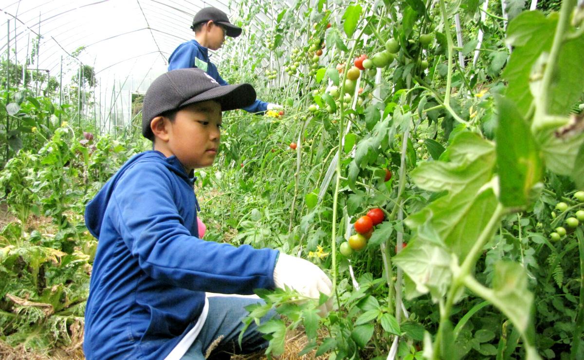 17706:農業と食を楽しむ!畑の楽校キャンプ
